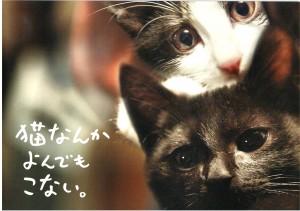 猫なんかよんでもこない。(2)